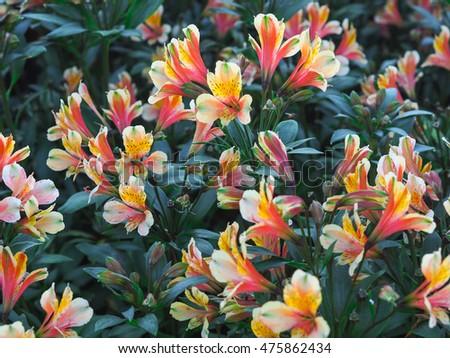 Flowers at Ulun Danu #475862434