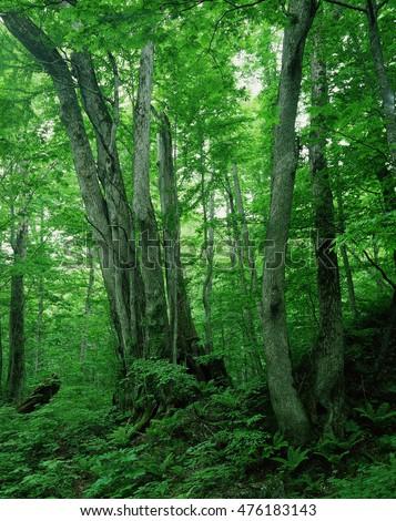 Green forest nature landscape #476183143