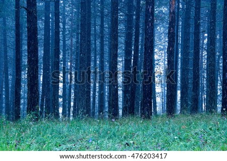 Mist in coniferous forest in blue, National park Tara #476203417