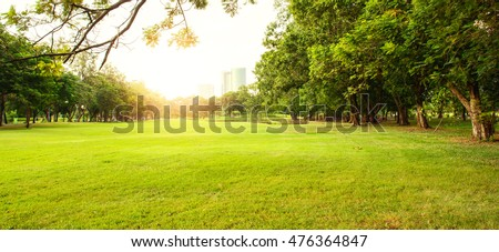 Green beautiful park in morning  #476364847