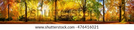 Extra wide panorama of a gorgeous forest in autumn, a scenic landscape with pleasant warm sunshine Royalty-Free Stock Photo #476416021