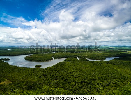 Amazon rainforest in Brazil, South America