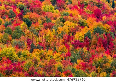 Aerial scenic autumn view of a colorful forest, Canada.