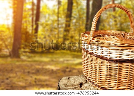 brown old basket and forest place  #476955244
