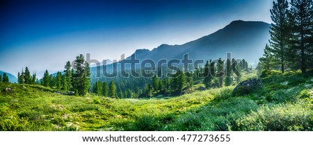 mountain range and evergreen trees, Khamar-Daban, Siberia, Russia, national park Royalty-Free Stock Photo #477273655