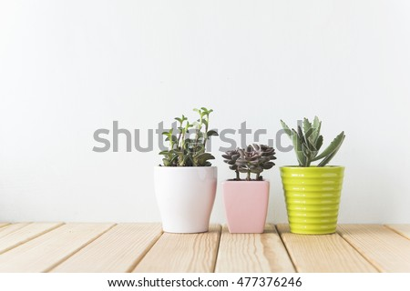 Indoor plant on wooden table and white wall #477376246