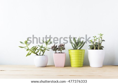Indoor plant on wooden table and white wall #477376333