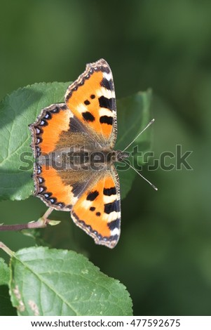Chocolate butterfly on a leaf #477592675