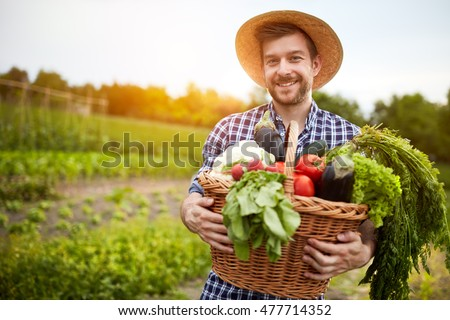Man holding basket with healthy organic vegetables  #477714352