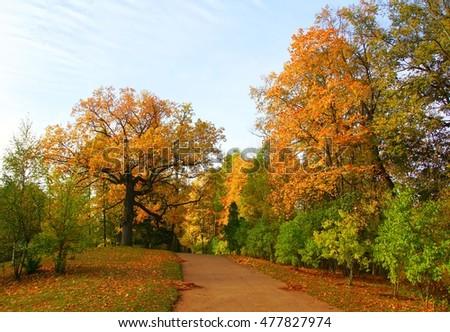 Autumn morning in Alexandrovsky Park in Tsarskoye Selo #477827974
