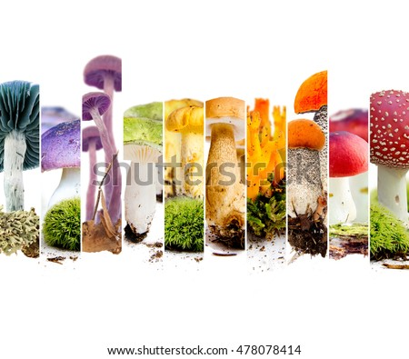 Photo of boletus, russula, chanterelle and fly agaric abstract mix stripes; mushroom concept; rainbow colors; white space for text