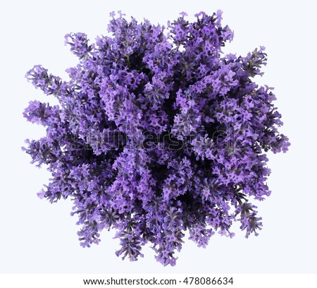Top view of a bouquet of purple lavender flowers on a white background. Bunch of lavandula flowers. Photo from above.