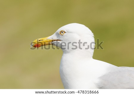 seagull in the nature #478318666