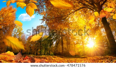 Golden autumn scene in a park, with falling leaves, the sun shining through the trees and blue sky #478471576