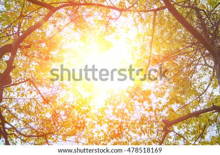 colorful autumn leaves on trees against sunny clear sky #478518169