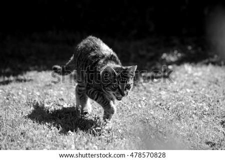 Cat #478570828