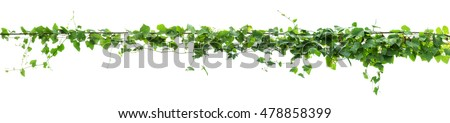 Vines on poles, plant on white background #478858399