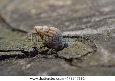 HERMIT CRAB OUT OF THE SHELL  #479347591