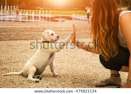 handshake between woman and pretty puppy- High Five - teamwork between girl dog Royalty-Free Stock Photo #479821534