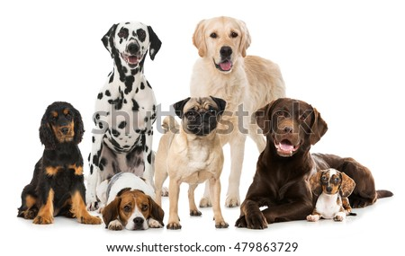 Different dogs isolated on white Royalty-Free Stock Photo #479863729