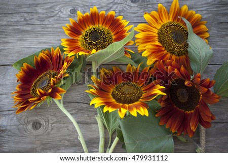 orange flowers, sunflowers on old wooden background #479931112