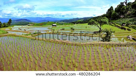 Terraced rice fields and hut on Mountain in nature,Mae chaem, Chaing Mai, Thailand #480286204