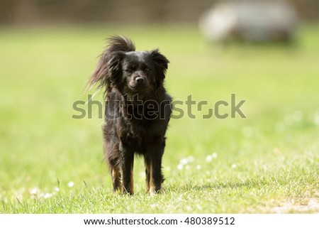 funny dog in sunny day, animals series #480389512