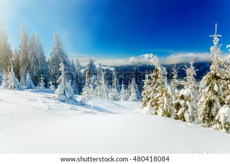 Beautiful mountain snowy landscape and snow covered trees. Beautiful sunny day in the mountains #480418084