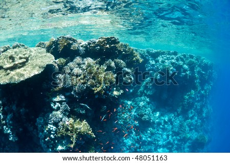 coral reef, an underwater landscape. Wildlife of the Red Sea. #48051163