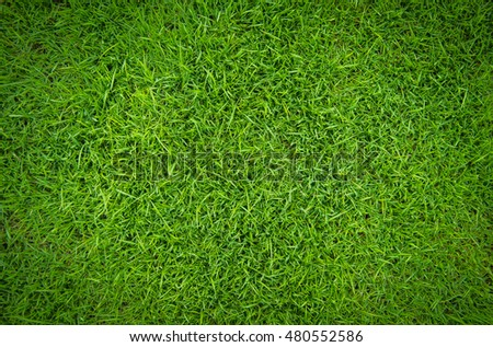 green grass natural background texture #480552586