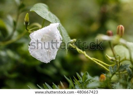 Beautiful white flower after a rain #480667423