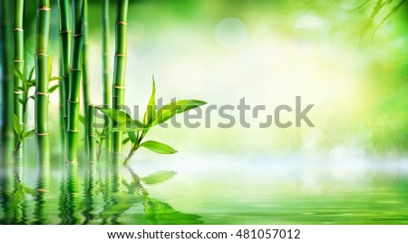 Bamboo Background - Lush Foliage With Reflection In The Water  Royalty-Free Stock Photo #481057012