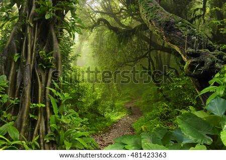 Asian tropical jungle Royalty-Free Stock Photo #481423363