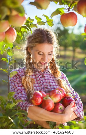 Young woman picking apples from apple tree on a lovely sunny summer day  in orchard #481624603
