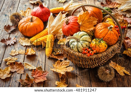 Autumn still life with pumpkins, corncobs and leaves on wooden background #481911247