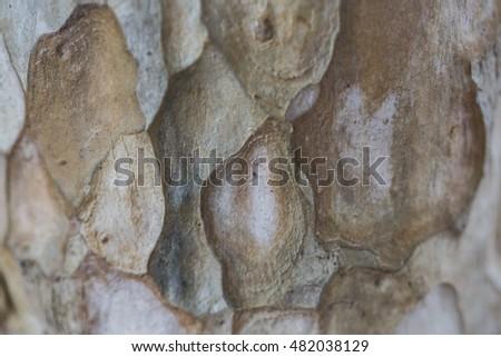 tree bark texture natural detail abstract #482038129