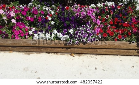 Colorful flowers on the park. #482057422