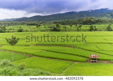 beautiful rice farms in northern thailand #482092378