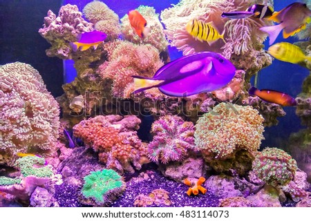 The coral and fish in saltwater Aquaculture. #483114073