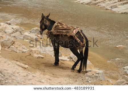 A donkey on the riverbank used to carry water and laundry by the local nomads in Todgha Gorge,Morocco. #483189931