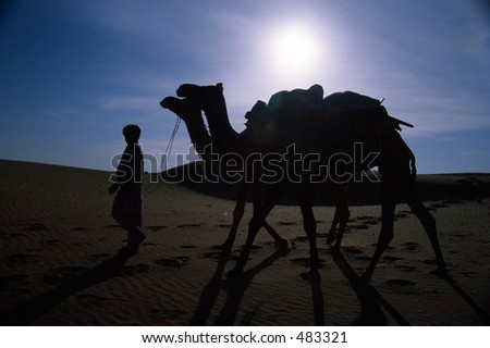 Camel in the desert night #483321