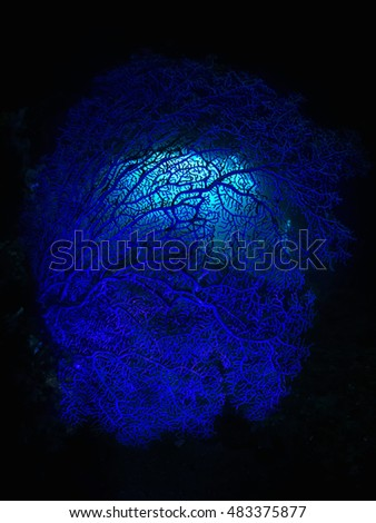 Sea fan in cave lit in blue #483375877