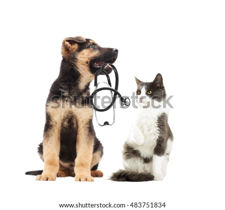 cute German Shepherd puppy vet and cat and stethoscope #483751834