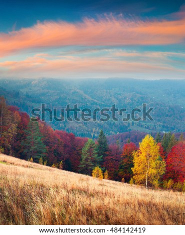 Colorful autumn landscape in the Carpathian mountains. Splendid outdoor scene near the Roztoky village, Ukraine, Europe. Artistic style post processed photo. #484142419