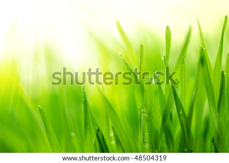 Fresh green grass with water droplet in sunshine(Shallow Dof) #48504319