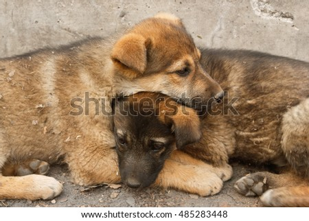 Two sad homeless puppy lying in the arms to keep warm on the cold ground. Soft focus #485283448
