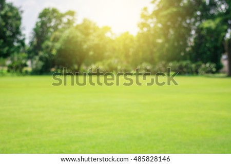 Green lawn blur and soft light