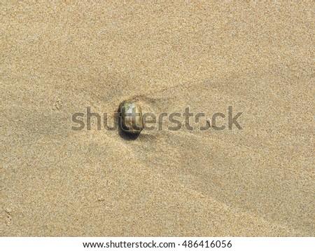 Rock on the beach #486416056