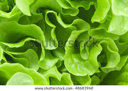 Fresh green Lettuce salad background #48683968