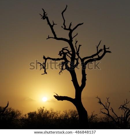 Bushveld Sunset #486848137